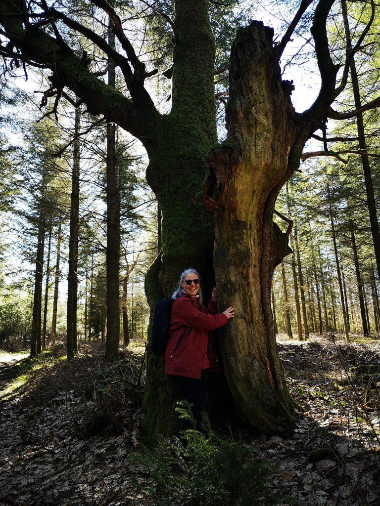 Bosque en Luxemburgo